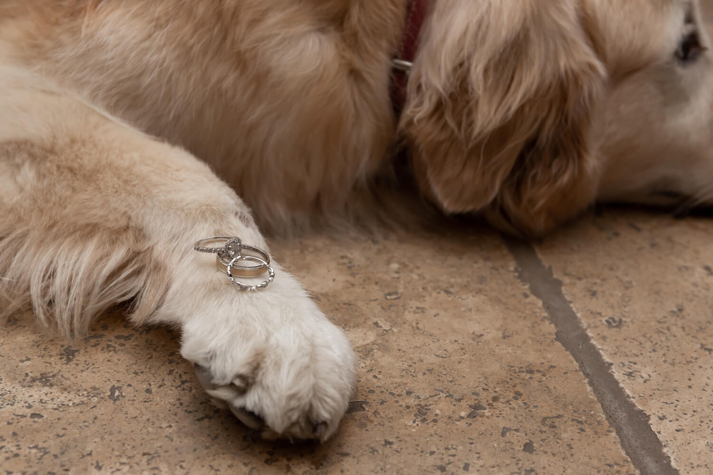 wedding rings on dog