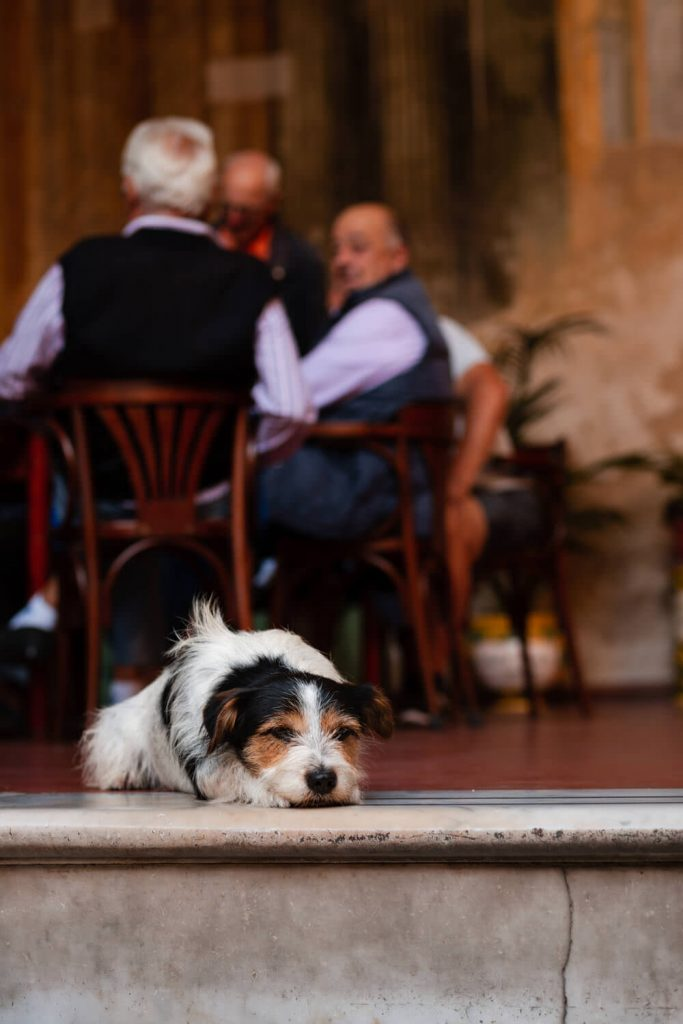 dog in sorrento italy